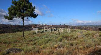 Terreno de Pinhal em Ribamondego
