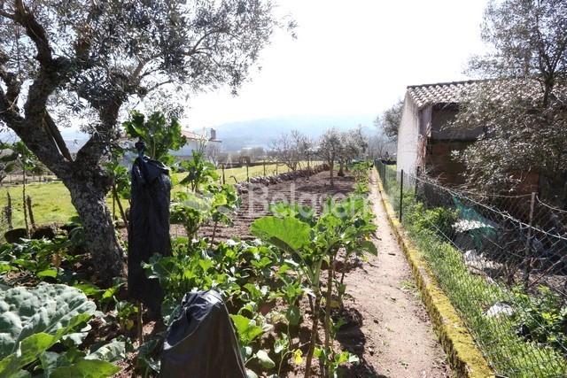 Terreno agrícola na Arrifana – Seia