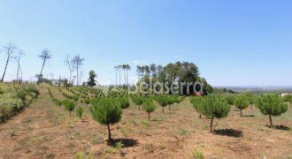 Terreno para construção na Folgosa da Madalena