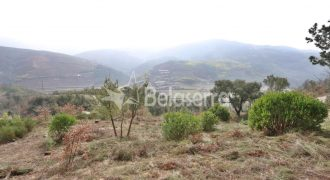 Terreno de pinhal em Sandomil