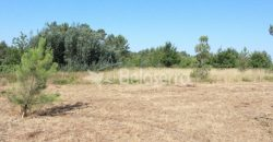 Terreno agrícola na Vila Chã