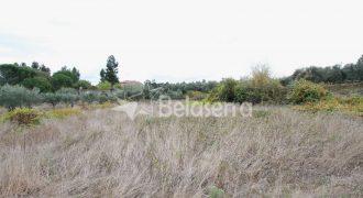 4 Terrenos agrícolas em Vila Nova de Tazem