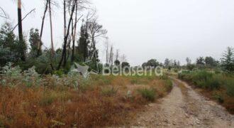 Terreno de pinhal em Santa Eulália