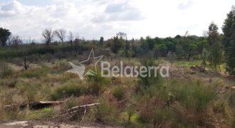 Terreno de Pinhal no Seixo da Beira