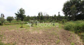 Terreno agrícola e pinhal no Espadanal – Tábua