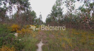 Terreno com eucaliptos no Espadanal – Tábua