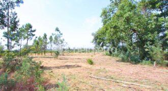 Terreno agrícola em Moimenta da Serra